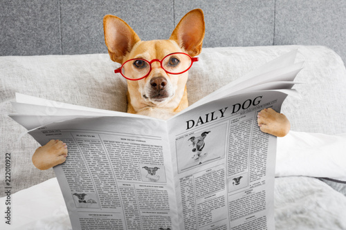 Keuken foto achterwand Crazy dog dog in bed reading newspaper