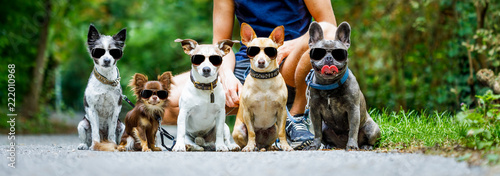 Photo dogs with  leash and owner ready to go for a walk