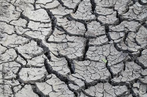 Fotografie, Obraz  a very dry cracked soil on a field