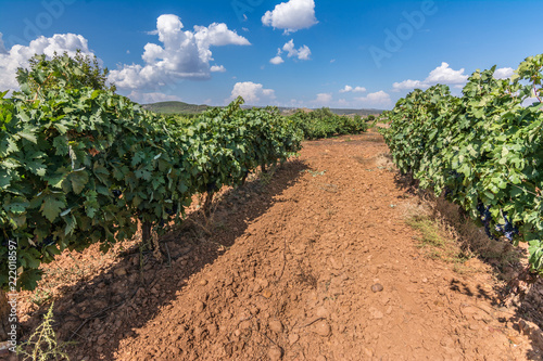 Vineyards Designation of origin Los Valles in Brime de Urz county of the Valleys of Benavente in Zamora (Castilla y Leon, Spain)