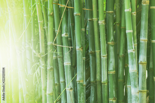 Deurstickers Bamboo Beautiful bamboo forest, green nature background.