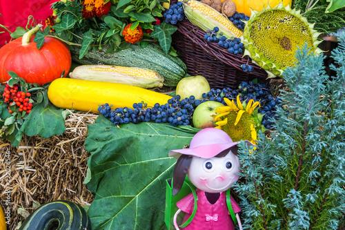 Fototapety, obrazy: Kompozycje warzywno owocowe jako tła z płodów rolnych