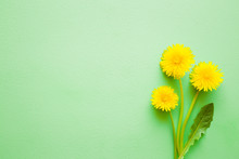 Fresh Dandelions With Leaf On Pastel Green Desk. Minimalism. Bright Colors. Mockup For Special Offers As Advertising Or Other Ideas. Empty Place For Inspirational, Motivational Text, Quote Or Sayings.