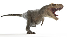 3d Rendered Medically Accurate Illustration Of A T-rex