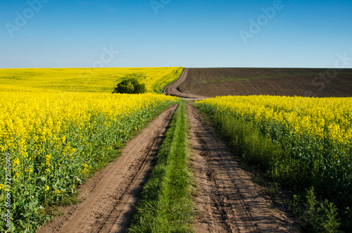 Tuinposter Platteland Beautiful landscape with road in the heaven middle of the field of rape (optimism, career, success, overcome difficulties - concept)