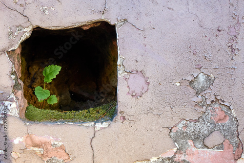 Photo  Small, but strong green plant growing inside the stone wall