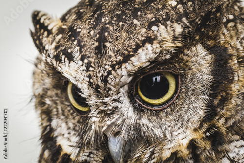 Fotobehang Uil owl photo