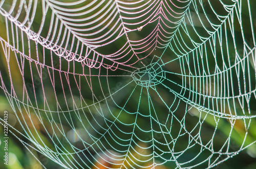 Colorful spider web with dew drops in the morning