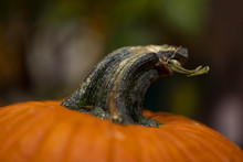 A Macro Shot Of A Twisted Pumpkin Stem