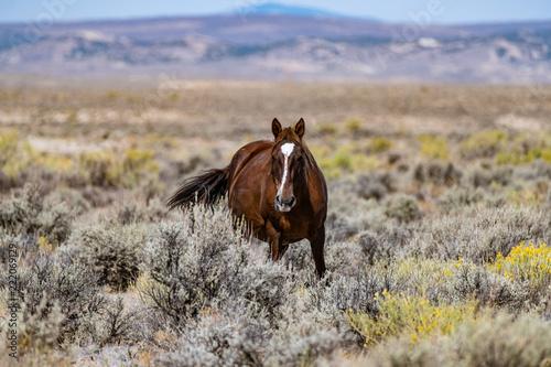 Платно Wild (Feral) Mustangs in the Colorado High Desert