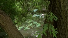 Lotus Leaf Smooth Blur To Clear.