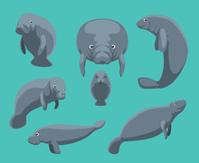 Manatee Seven Poses Set Vector...