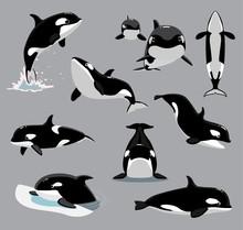 Orca Killer Whale Poses Cartoon Vector Illustration
