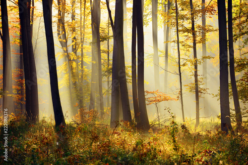 Photo  Autumn forest landscape