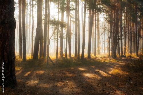 Fototapeten Wald Walk in the autumn forest. Autumn colors. Sun rays.