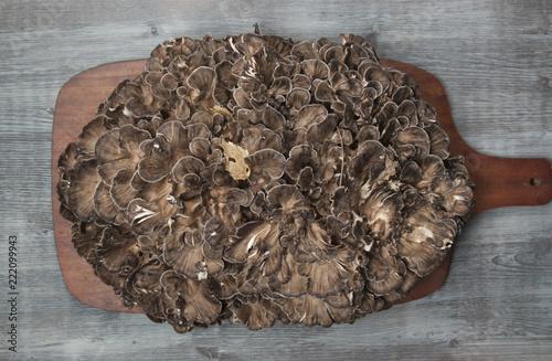 Grifola frondosa on a wooden board Fototapeta
