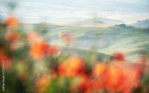 Deurstickers Toscane Blurry red poppy field and Tuscany green rolliing hills and field landscape with misty morning fog.
