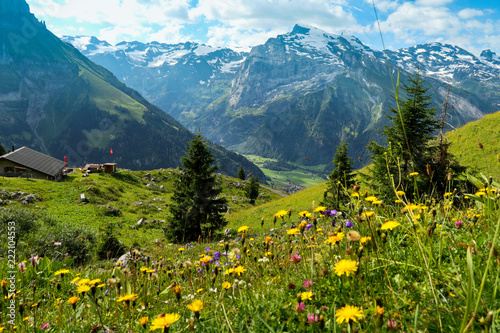 Obraz na plátně Swiss Summer Mountain and Flowers Landscape