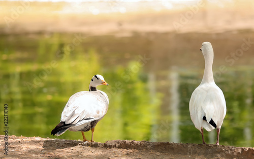 Fotografie, Obraz  Birds in zoological garden