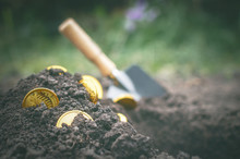 Coins Searching. Treasure Hunting Concept. In Search Of A Lost Treasure.