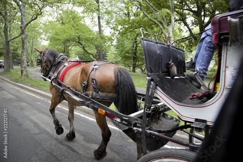 Fotomural Carrozze con cavalli a central park