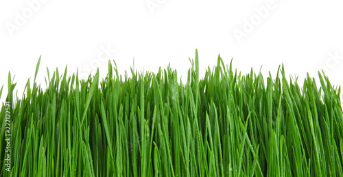 Deurstickers Gras Sprouted wheat grass on white background