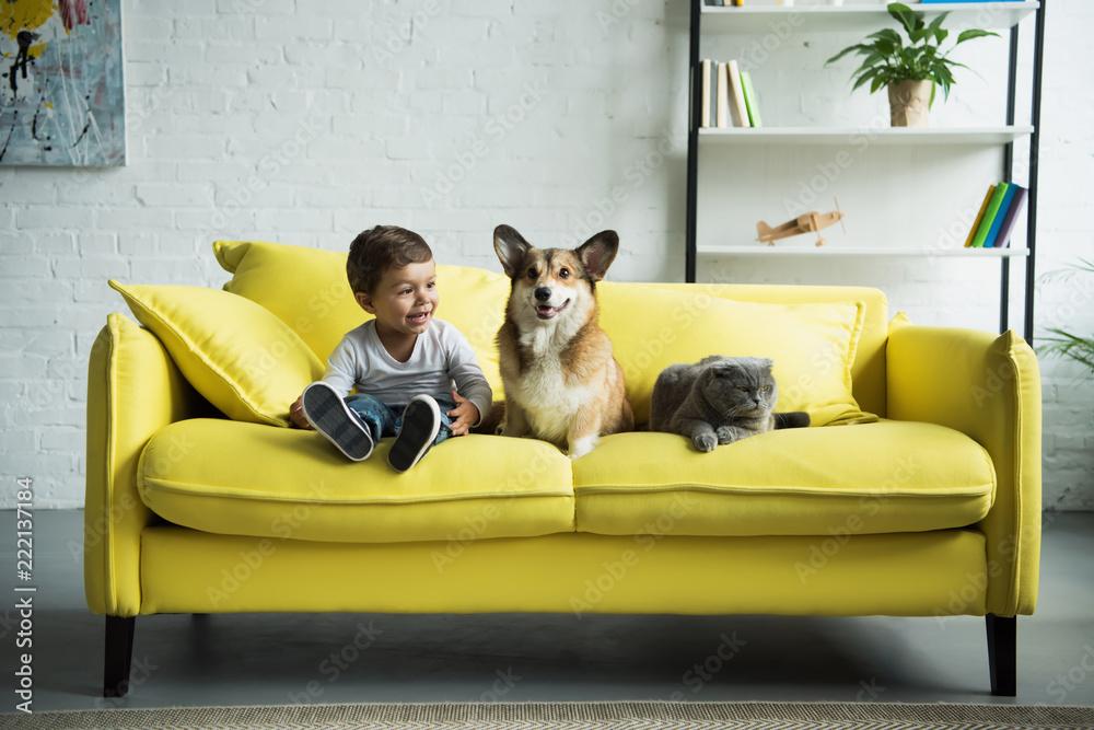 Fototapeta adorable boy with welsh corgi dog and scottish fold cat sitting on yellow sofa at home