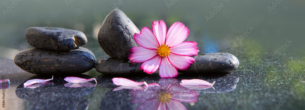 Fototapeta Black spa stones and pink cosmos flower isolated on green.