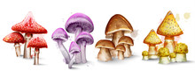 Mushrooms Set Collection Watercolor Vector Isolated On White Backgrounds