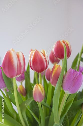 Foto op Plexiglas Tulp Kompozycja z tulipanów