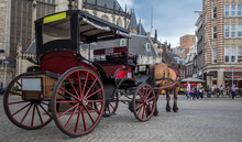 The Horses Carriage In Amsterdam
