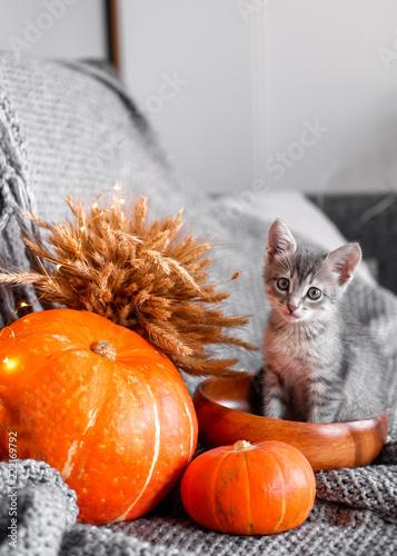 Obraz Cute kitten relaxing on warm plaid by autumn rustic home decor. halloween - fototapety do salonu
