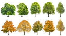 Autumn Summer Trees Isolated White Background