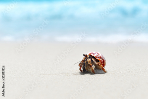 Hermit crab walking on the beach. Canvas-taulu