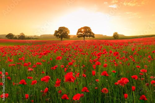 Fotobehang Poppy Poppy field at sunset