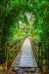 Fototapeta Bambus bridge in bamboo forest
