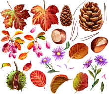 Autumn, Fall Stuff Collection, Watercolor Illustration, Isolated On White