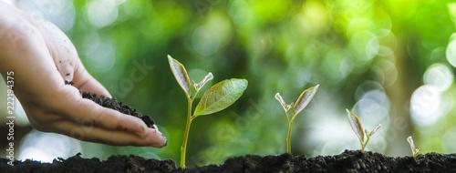 Obraz Trees with money, savings and money. - fototapety do salonu
