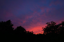 Sunset With Purple Sky And Tree Silhouettes
