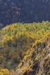 紅葉する浅間山湯ノ平高原