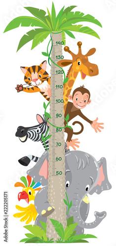 Fototapeta premium Żyrafa, małpa, tygrys. Miernik ścienny lub wysokościowy