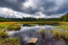 Black Lake And Marshes, Forest...