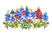 Watercolor Bluebonnets Wildflo...