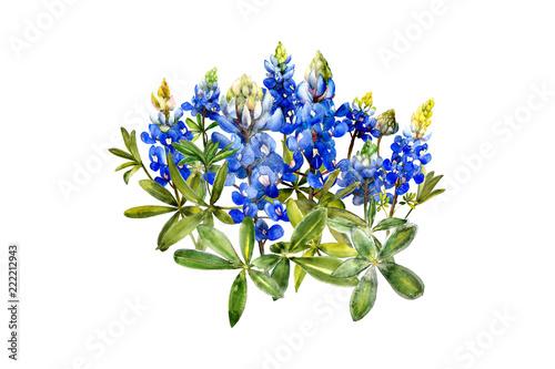 Fototapeta watercolor bluebonnets wildflowers design