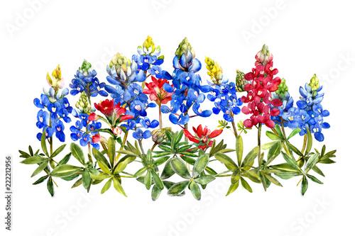 Photo watercolor bluebonnets wildflower bunch