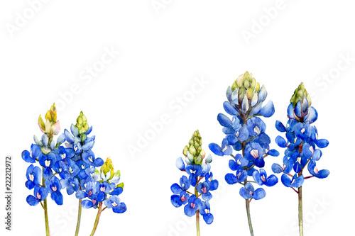 Fotografie, Obraz watercolor bluebonnets wildflowers