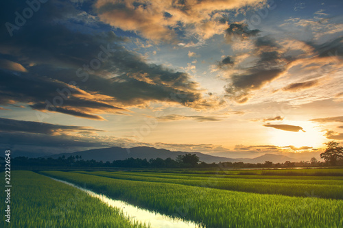 Grass on the field during sunrise. Agricultural landscape in the summer time in Thailand