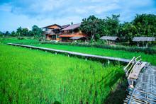 Beautiful Rice Field Of Pua Di...