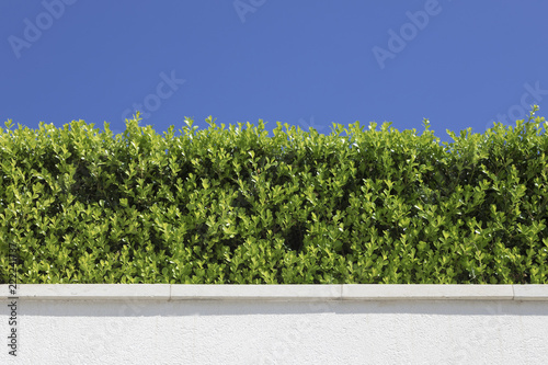 Foto  Cespuglio verde con sfondo cielo