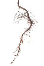 Roots Of Tree Is Isolated On W...